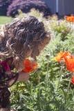 Niña curiosa que mira las flores Imagenes de archivo