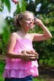 Niña divertida que come la cereza escogida fresca en jardín de la cereza Imagenes de archivo