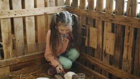Niña en el zoo-granja que alimenta el conejo Conejos en el zoo-granja metrajes