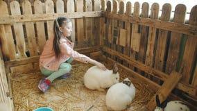 Niña en un zoo-granja en la pajarera con los conejos almacen de metraje de vídeo