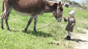 Niña hermosa que alimenta un burro en una granja almacen de video