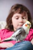 Muchacha con un cockatiel Fotografía de archivo