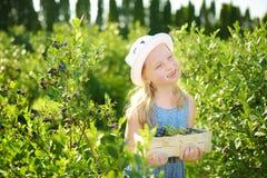 Niña linda que escoge bayas frescas en granja orgánica del arándano en día de verano caliente y soleado Alimento biológico sano f foto de archivo