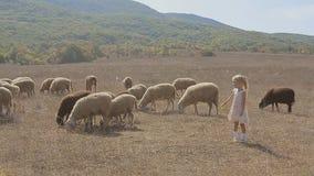 Niña linda que intenta alimentar las ovejas en a almacen de video