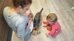 Niña linda y perro divertido en casa La mamá y la hija están alimentando un pequeño perro almacen de metraje de vídeo