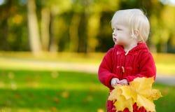 Niña pequeña adorable que sostiene las hojas de arce amarillas Fotos de archivo libres de regalías