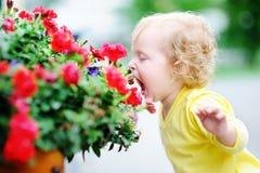 Niña pequeña del pelo rizado que huele las flores rojas Imagen de archivo