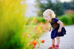 Niña pequeña del pelo rizado que huele las flores rojas Imagenes de archivo