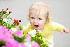 Niña pequeña divertida del pelo rizado que huele las flores rojas en el día de la primavera o de verano Imagen de archivo libre de regalías