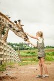 Niña que alimenta una jirafa en el parque zoológico Fotografía de archivo