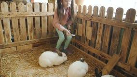 Niña que frota ligeramente y que alimenta los conejos en el zoo-granja almacen de metraje de vídeo
