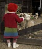 Niña que habla con los corderos Foto de archivo