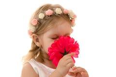 Niña que huele una flor en blanco Fotografía de archivo