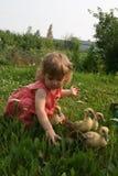 Niña que juega con los patos del bebé foto de archivo libre de regalías