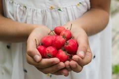 Niña que sostiene bayas rojas en sus manos Foto de archivo