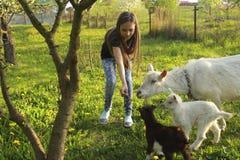 Niña y cabra nacional blanca con las pequeñas cabras en el prado en un día soleado en primer del verano fotos de archivo libres de regalías