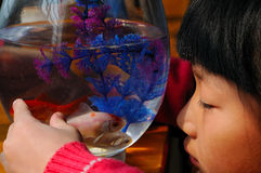 Niña y goldfish Fotos de archivo