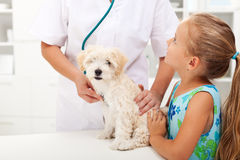 Niña y su animal doméstico mullido en el veterinario Fotografía de archivo libre de regalías