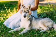 Niña y su perro Husky In Summer Park fotografía de archivo libre de regalías