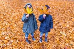 Niñas con una cara ocultada con una hoja de arce en un otoño p fotos de archivo