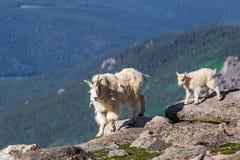 Niñera y cabrito de la cabra de montaña Imágenes de archivo libres de regalías