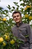 Niño adolescente en la cosecha de la manzana Foto de archivo