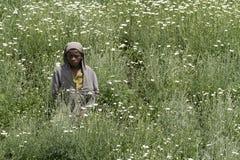 Niño africano en un campo de las margaritas Imagen de archivo libre de regalías