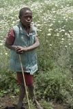 Niño africano en un campo de las margaritas Fotos de archivo libres de regalías