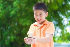 Niño asiático que sostiene la planta joven del almácigo en manos, en jardín, encendido Imágenes de archivo libres de regalías