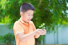 Niño asiático que sostiene la planta joven del almácigo en manos, en jardín, encendido Foto de archivo libre de regalías