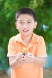 Niño asiático que sostiene la planta joven del almácigo en manos, en jardín, encendido Fotos de archivo