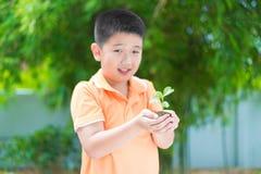 Niño asiático que sostiene la planta joven del almácigo en manos, en jardín, encendido Fotos de archivo libres de regalías