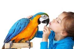 Niño con el loro del ara Foto de archivo