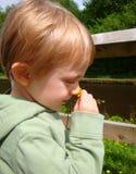Niño con el ranúnculo Imagen de archivo