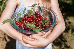 Niño con la cereza dulce madura recientemente escogida Fotos de archivo libres de regalías