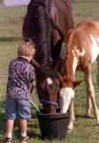 Niño con los caballos Imagenes de archivo