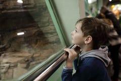 Niño curioso en parque zoológico Fotos de archivo