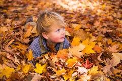 Niño de las hojas y del pelo en otoño fotos de archivo libres de regalías