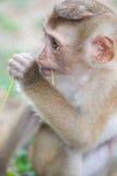 Niño del bosque del mono Imagen de archivo