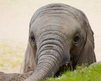 Niño del elefante imágenes de archivo libres de regalías