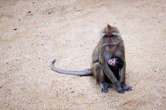 Niño del mono Foto de archivo libre de regalías