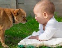 Niño del niño pequeño y perro felices de la chihuahua junto Imagenes de archivo