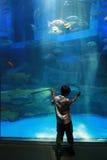 Niño en acuario Foto de archivo libre de regalías