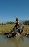 Niño en búfalo de agua Imágenes de archivo libres de regalías