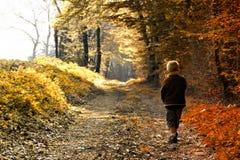 Niño en bosque fotos de archivo libres de regalías