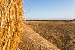 Niño en campo de trigo outdoor Imágenes de archivo libres de regalías