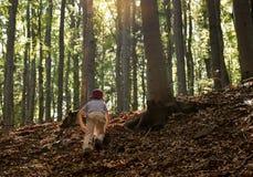 Niño en el bosque fotos de archivo libres de regalías