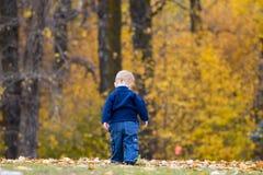 Niño en hojas de otoño Foto de archivo