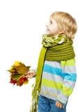 Niño en la bufanda de lana que sostiene las hojas de arce Fotografía de archivo libre de regalías