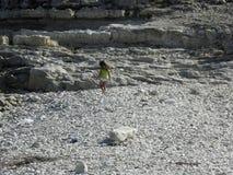 Niño en las rocas Fotografía de archivo
